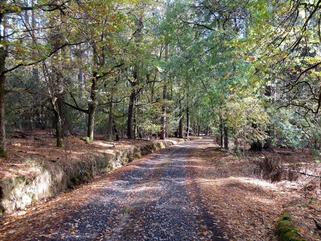 Creswick Forest path